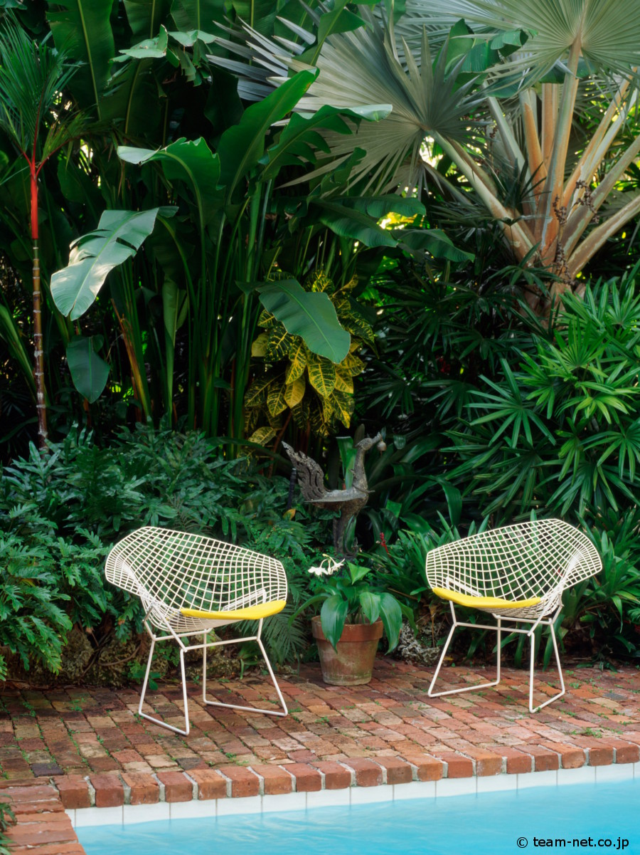 Tropical-Bertoia